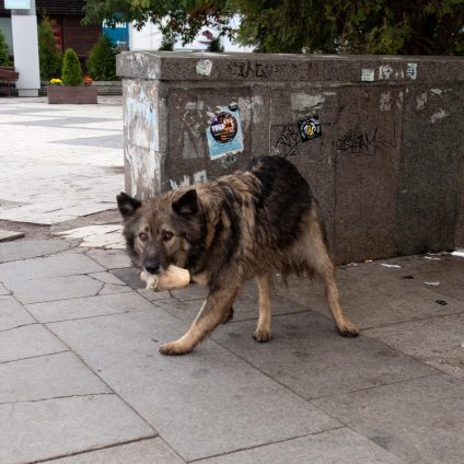 Street photograph of two strays dogs in Sofia, Bulgaria