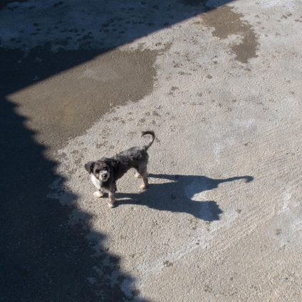 A street photograph of a stray dog